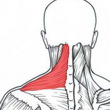 Nagging Neck Pain